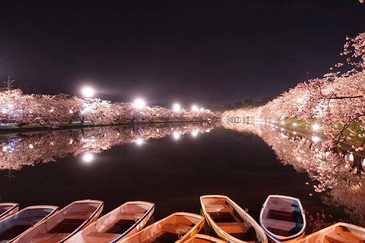 弘前城 堀の桜
