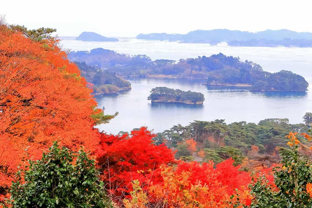 紅葉に染まる松島
