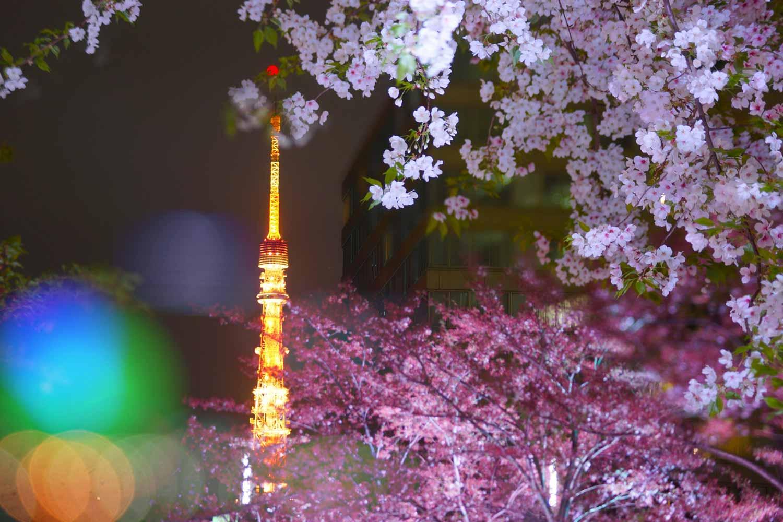 春・ライトアップされた東京タワー