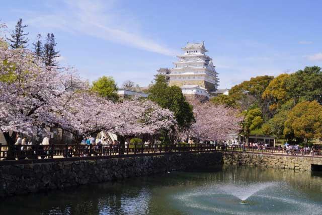 春の桜と姫路城