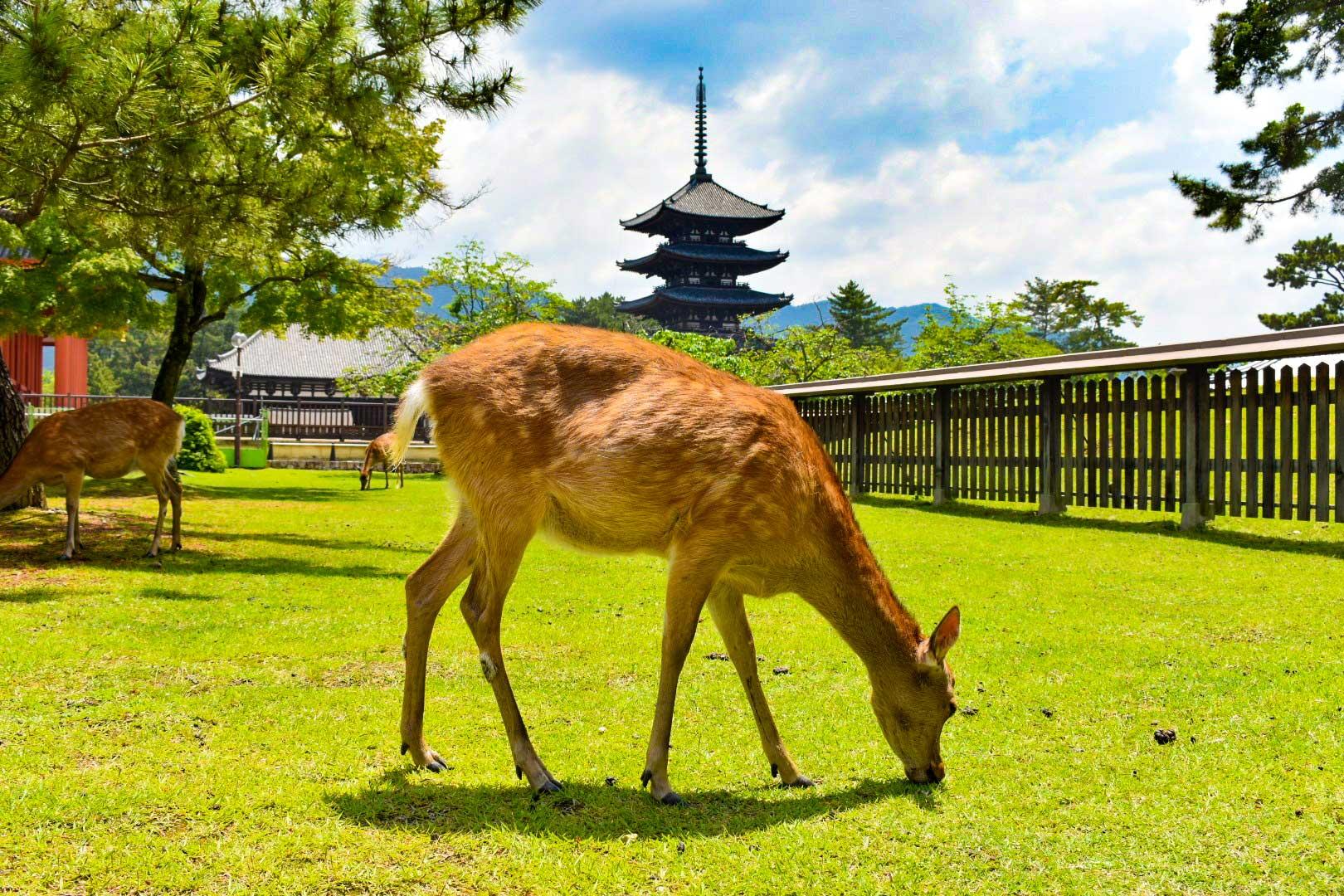 奈良の代表的な観光スポットです