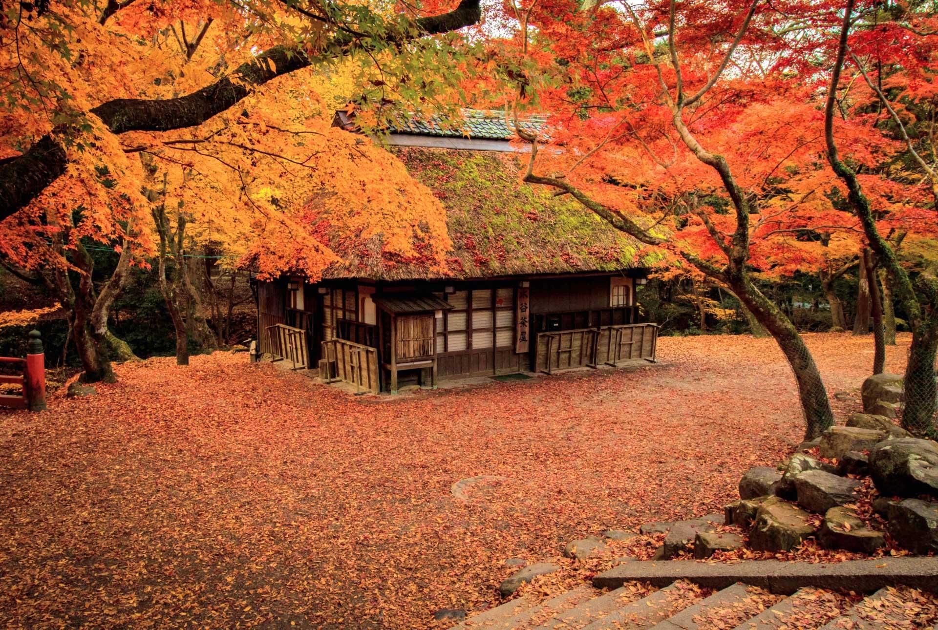 秋は紅葉で真っ赤に染まります