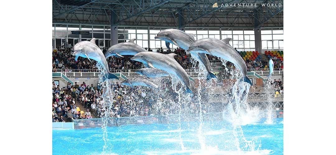 ダイナミックなイルカのショー