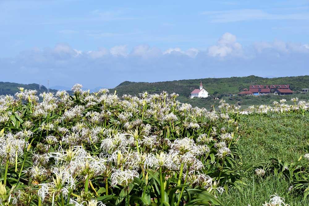 夏にはハマユウが花を咲かせます