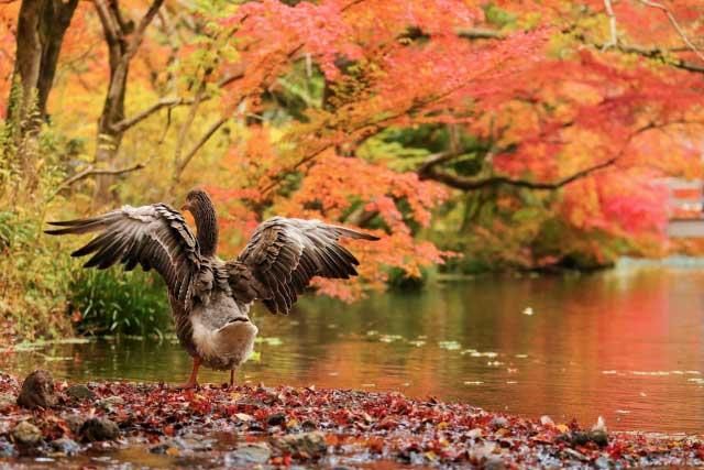 秋の紅葉の名所です