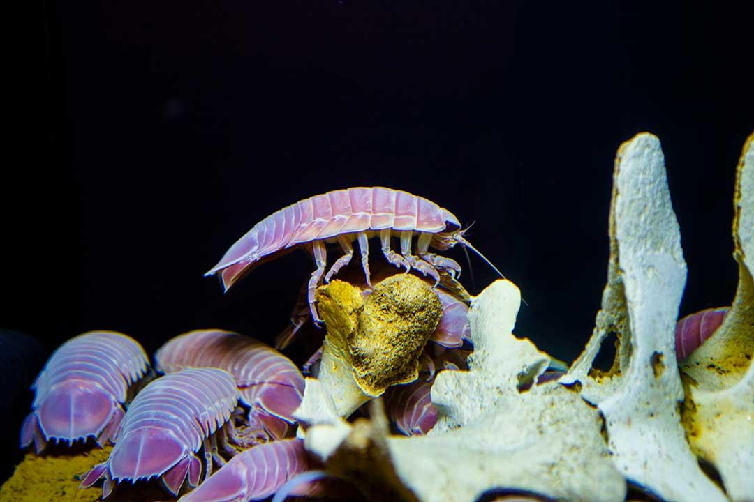 深海の小さな生き物