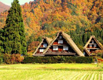 茅葺屋根が特徴的な合掌造りの建物