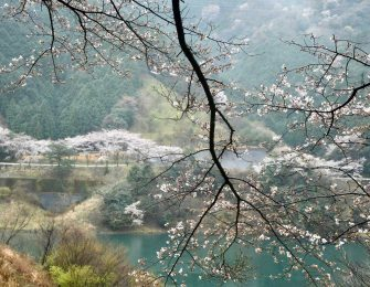 桜の季節の明神湖