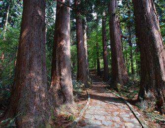 巨大な杉並木が続く山道