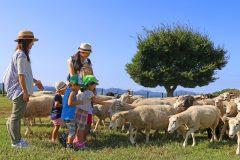 マザー牧場で動物たちとのふれあい体験