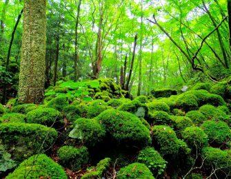 苔で覆われたような神秘的な場所