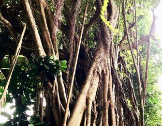 亜熱帯感あふれる木々