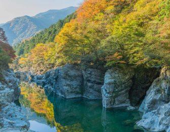 紅葉に色付く匹見峡