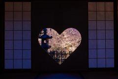 正寿院 猪目窓(夜桜)