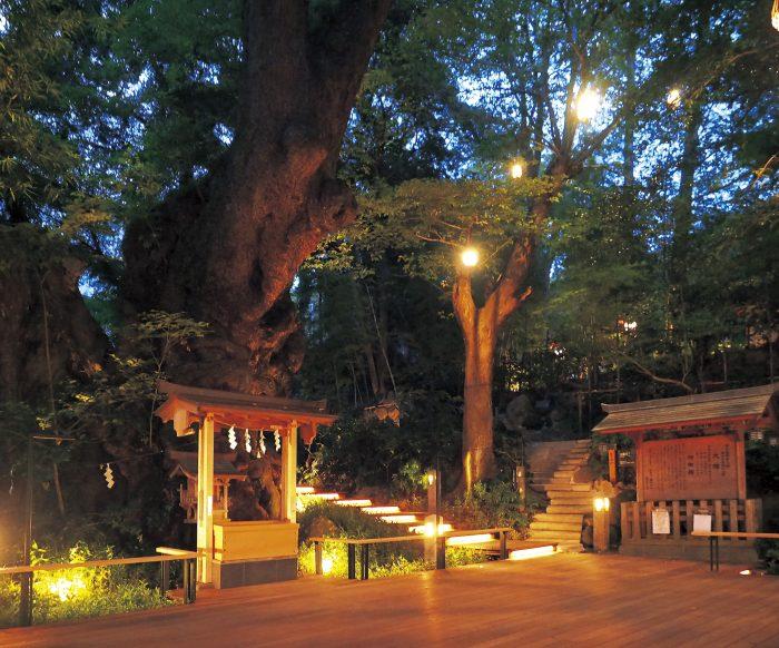 來宮神社の大楠のライトアップ
