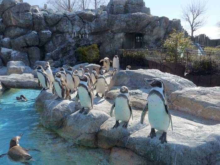 忘れちゃいけない!愛くるしいペンギン