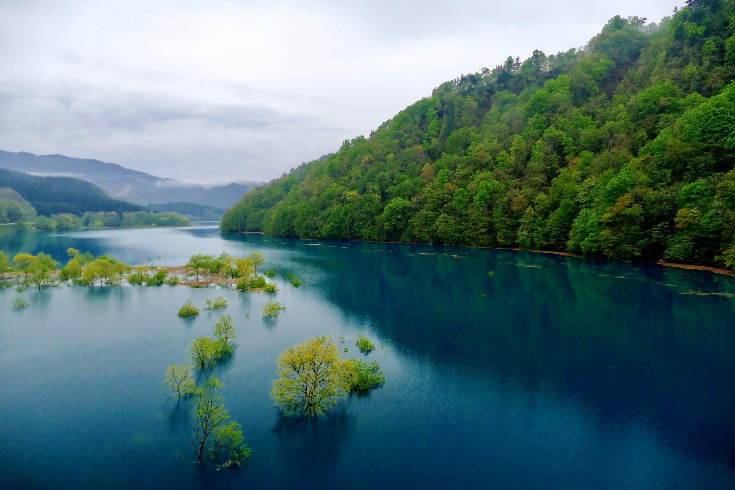 秋扇湖の水没林